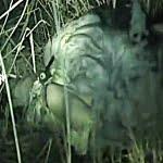 <閲覧注意>夜道を歩く美少女JK達が強姦魔に襲われ野外や車内でヤリ捨てレイプされる様子を盗撮【ヤバイやつ】